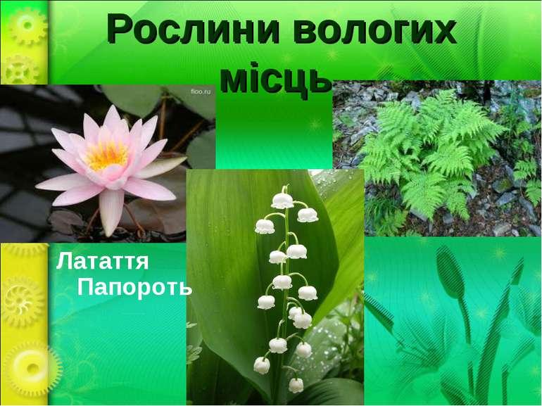 Рослини вологих місць Латаття Папороть Конвалія