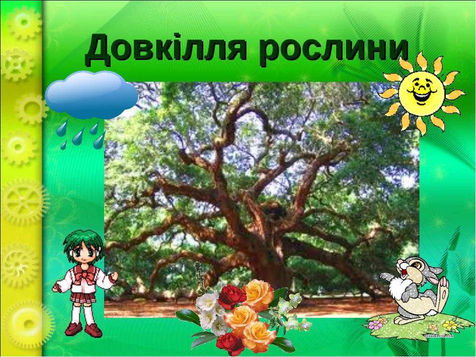 Довкілля рослини