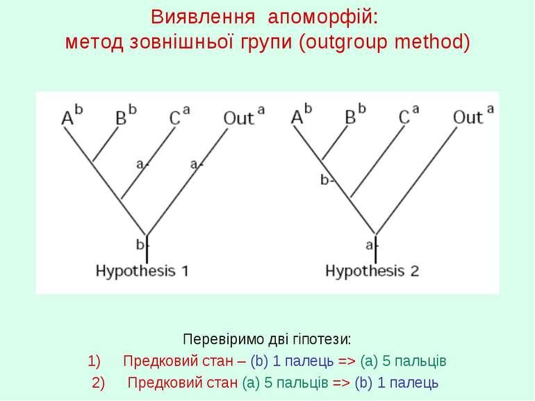 Виявлення апоморфій: метод зовнішньої групи (outgroup method) Перевіримо дві ...
