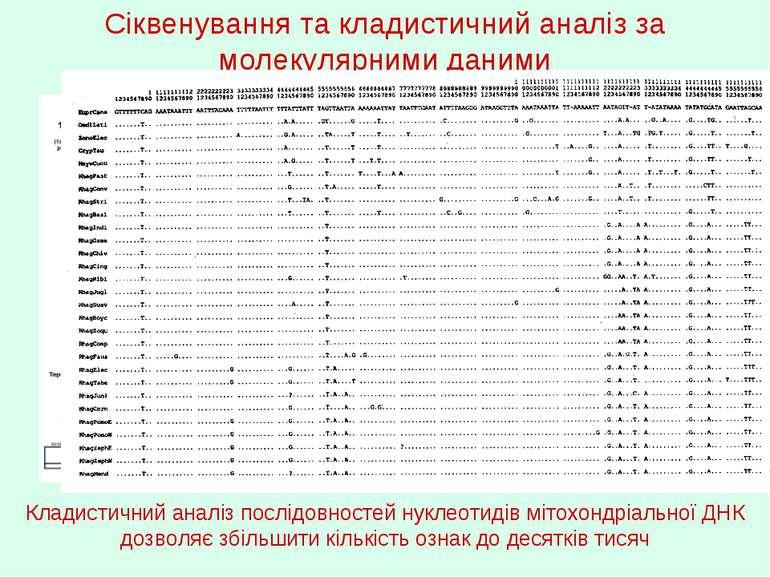 Сіквенування та кладистичний аналіз за молекулярними даними Кладистичний анал...