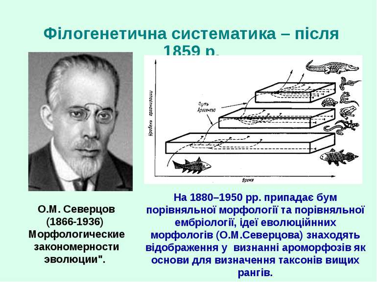 Філогенетична систематика – після 1859 р. На 1880–1950 рр. припадає бум порів...