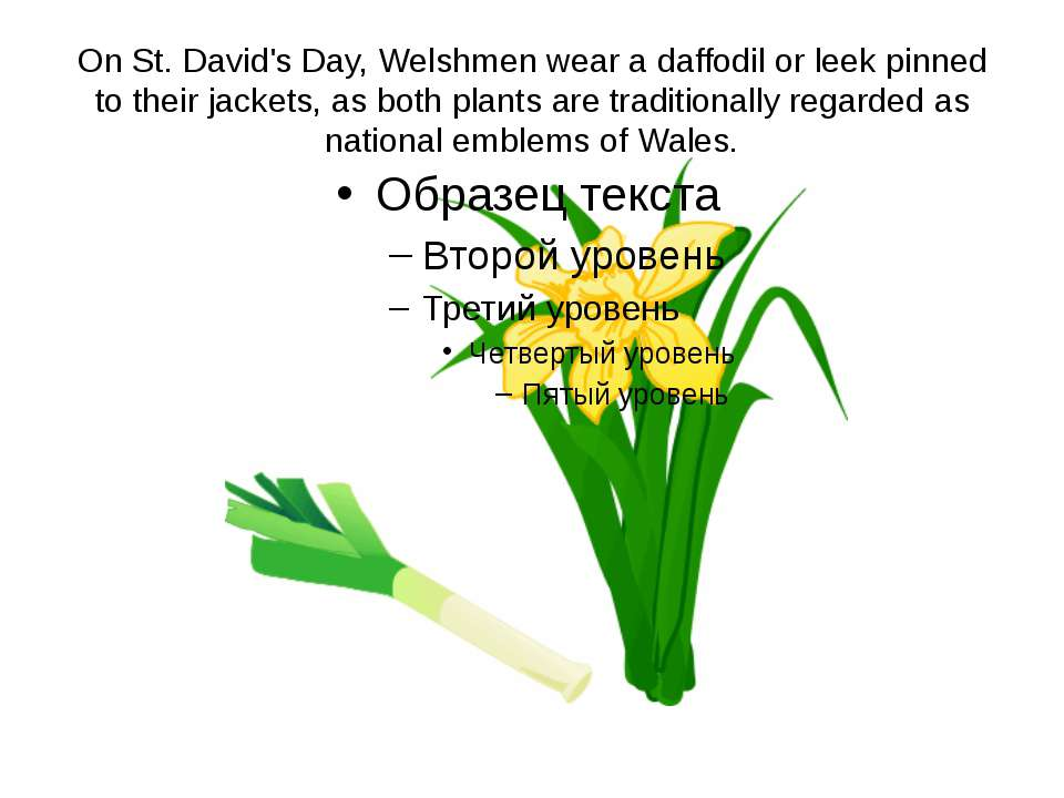 On St. David's Day, Welshmen wear a daffodil or leek pinned to their jackets,...