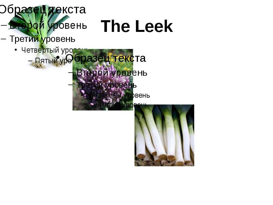The Leek
