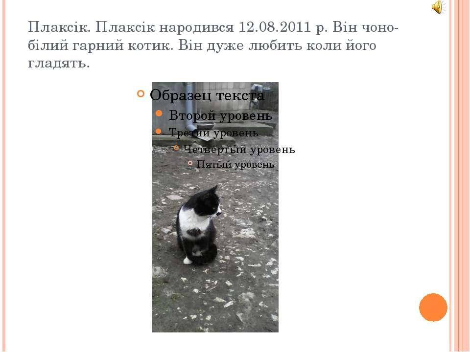 Плаксік. Плаксік народився 12.08.2011 р. Він чоно-білий гарний котик. Він дуж...
