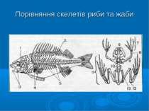 Порівняння скелетів риби та жаби
