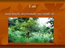 Гай - невеликий, переважно листяний ліс.