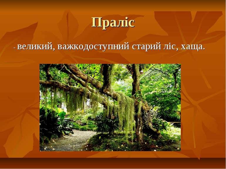 Праліс - великий, важкодоступний старий ліс, хаща.