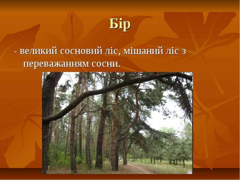 Бір - великий сосновий ліс, мішаний ліс з переважанням сосни.
