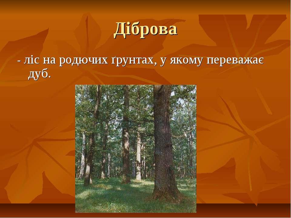 Діброва - ліс на родючих ґрунтах, у якому переважає дуб.