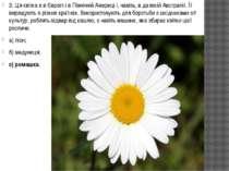 3. Ця квітка є в Європі і в Північній Америці і, навіть, в далекій Австралії....