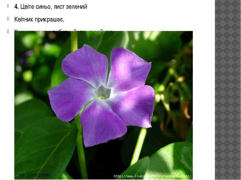 4. Цвіте синьо, лист зелений Квітник прикрашає, Хоч мороз усе побив – його не...