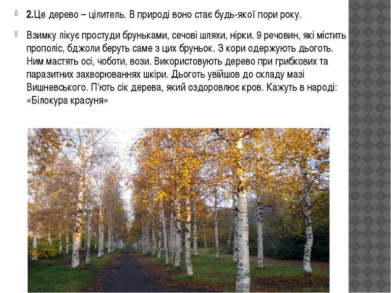2.Це дерево – цілитель. В природі воно стає будь-якої пори року. Взимку лікує...