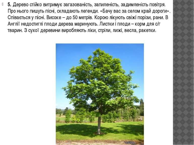5. Дерево стійко витримує загазованість, запиленість, задимленість повітря. П...