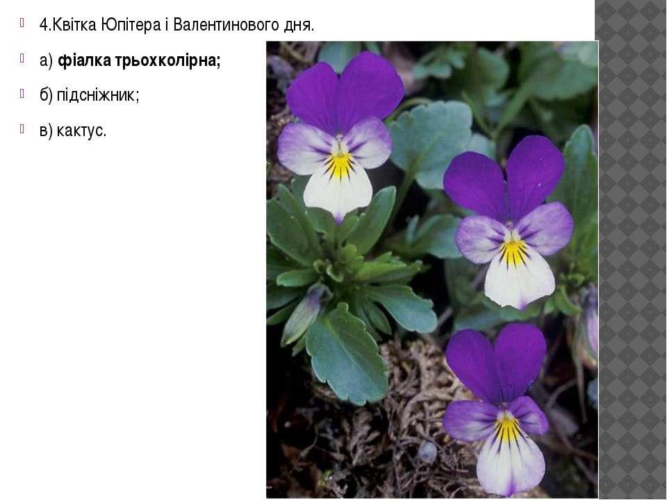 4.Квітка Юпітера і Валентинового дня. а) фіалка трьохколірна; б) підсніжник; ...