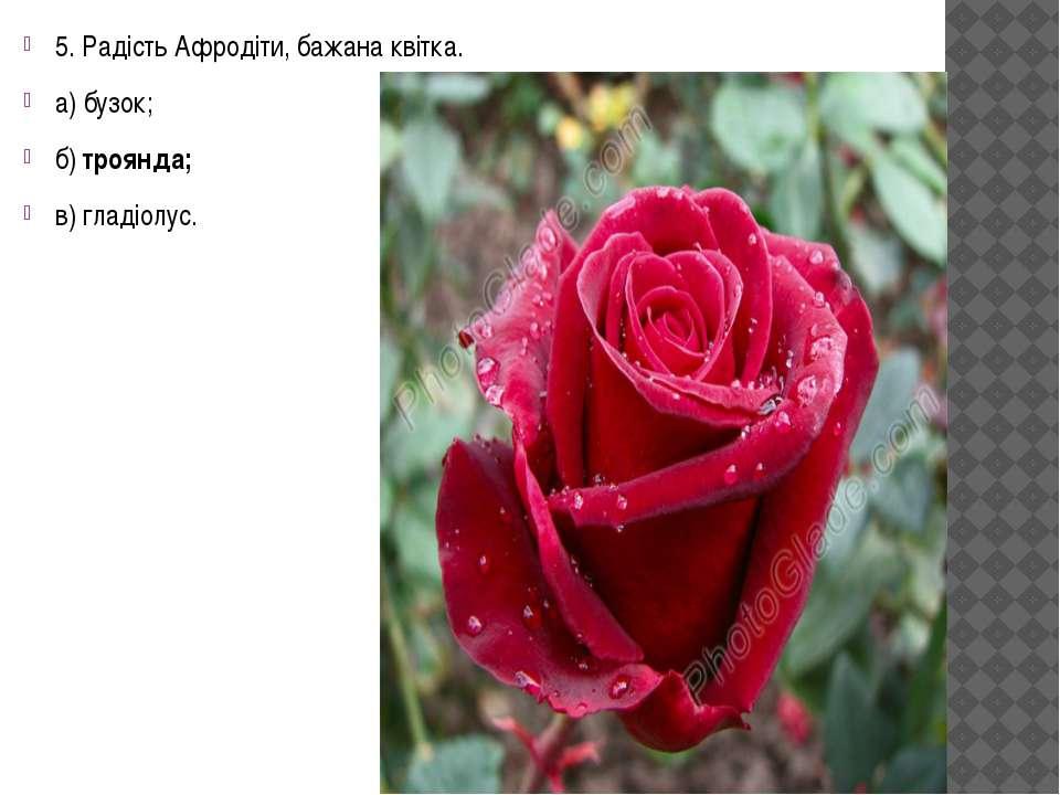 5. Радість Афродіти, бажана квітка. а) бузок; б) троянда; в) гладіолус.