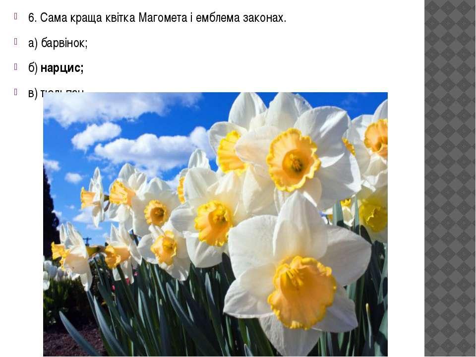 6. Сама краща квітка Магомета і емблема законах. а) барвінок; б) нарцис; в) т...