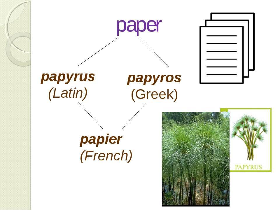 paper papier (French) papyrus (Latin) papyros (Greek)
