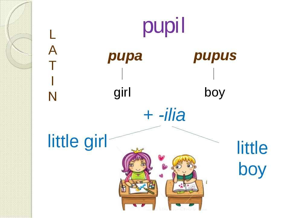 pupil pupa pupus L A T I N girl boy + -ilia little girl little boy