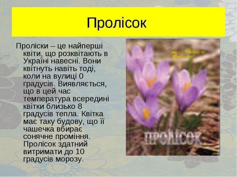 Пролісок Проліски – це найперші квіти, що розквітають в Україні навесні. Вони...