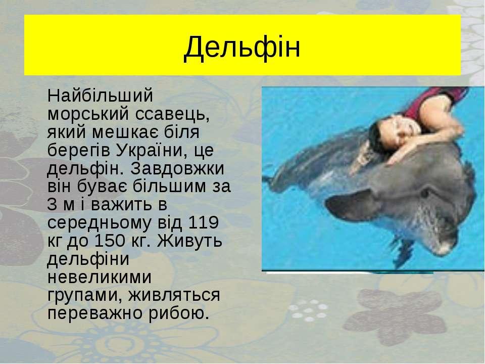 Дельфін Найбільший морський ссавець, який мешкає біля берегів України, це дел...