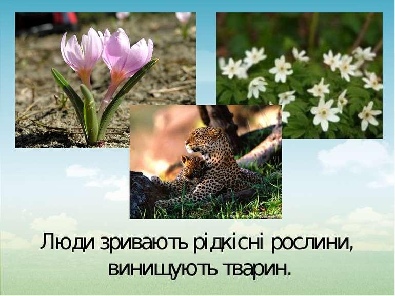 Люди зривають рідкісні рослини, винищують тварин.