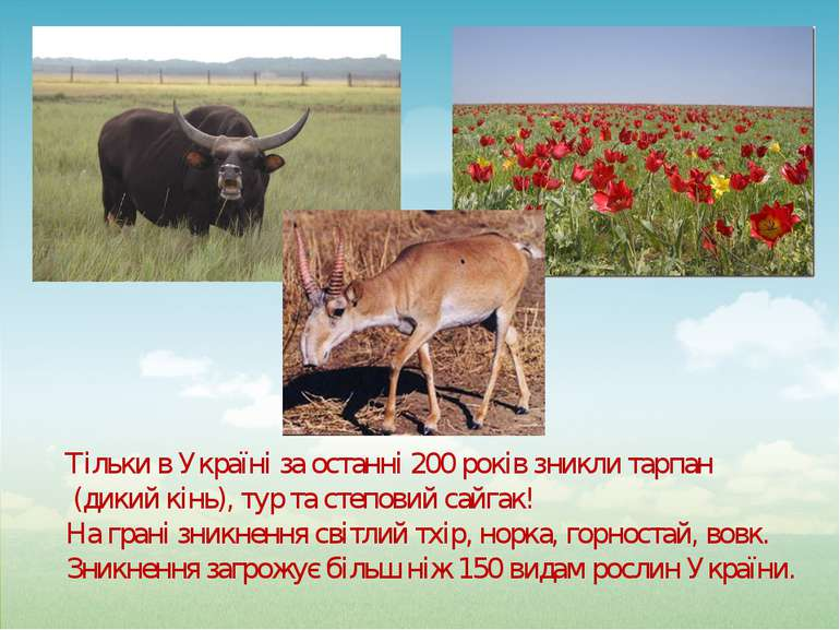 Тільки в Україні за останні 200 років зникли тарпан (дикий кінь), тур та степ...