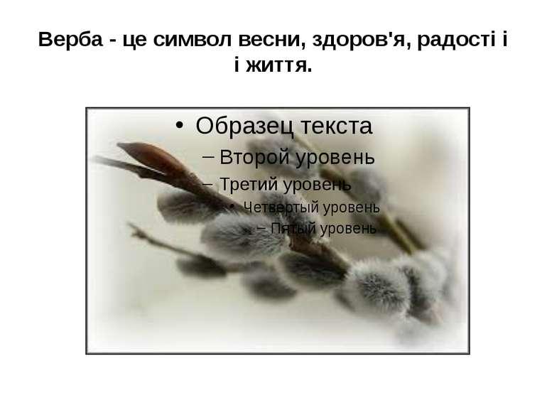 Верба - це символ весни, здоров'я, радості і і життя.
