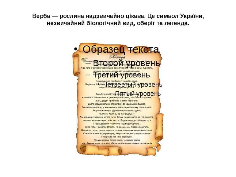 Верба — рослина надзвичайно цікава. Це символ України, незвичайний біологічни...