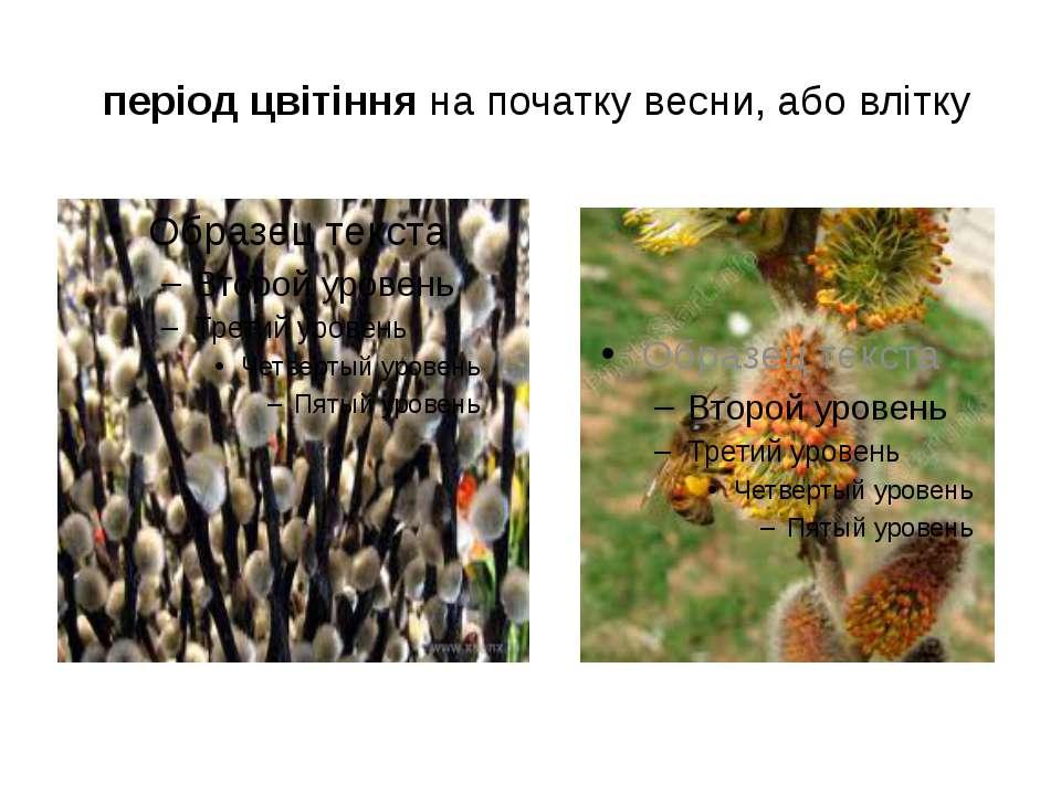 період цвітіння на початку весни, або влітку