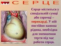 Серце міститься у спеціальній сумці або сорочці – перикарді. У ній постійно н...