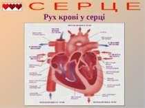 Рух крові у серці