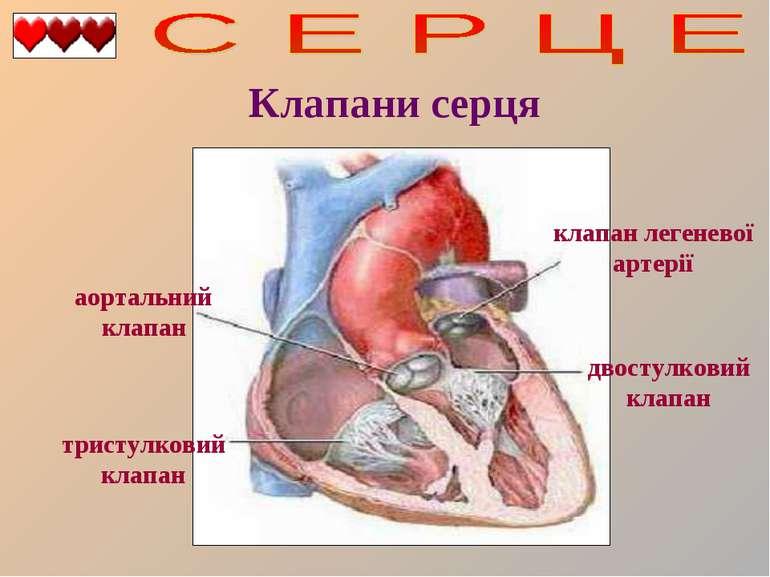 Клапани серця двостулковий клапан тристулковий клапан аортальний клапан клапа...