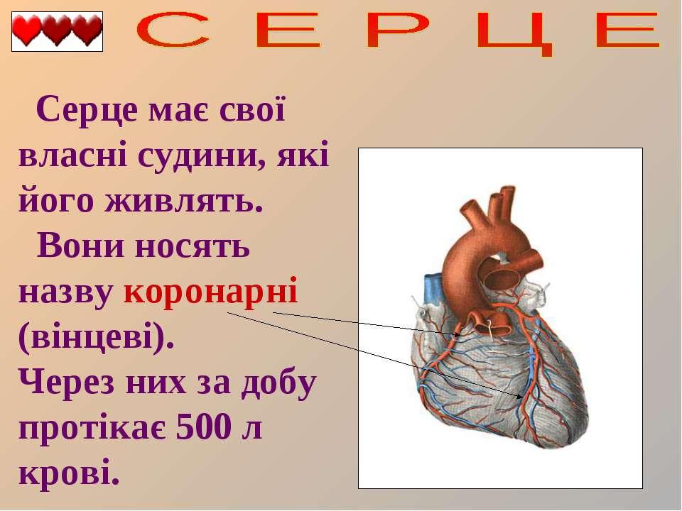 Серце має свої власні судини, які його живлять. Вони носять назву коронарні (...