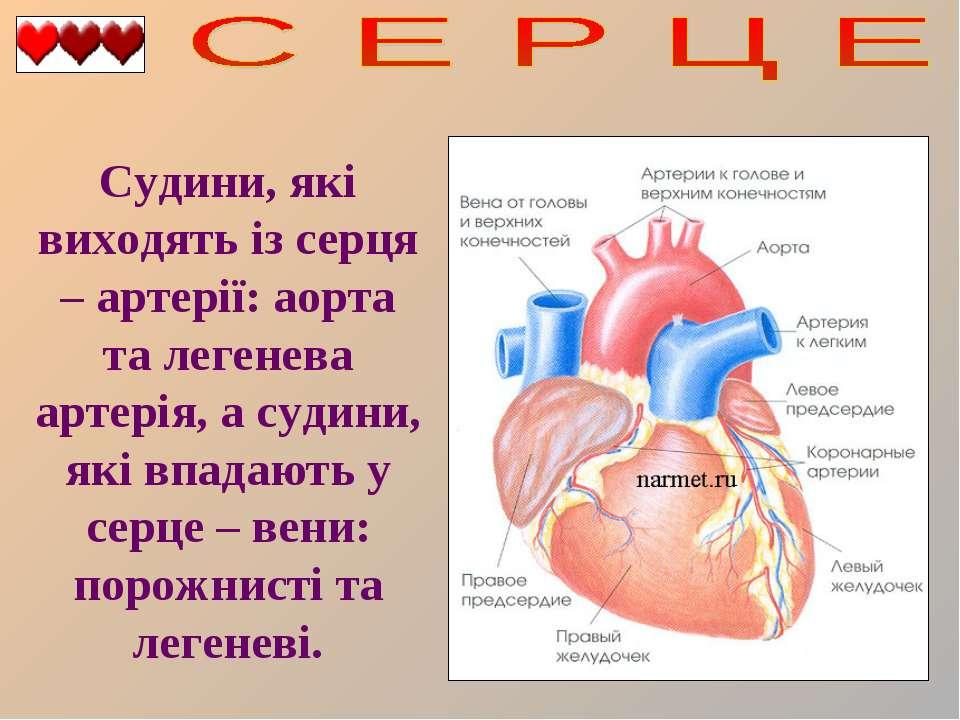 Судини, які виходять із серця – артерії: аорта та легенева артерія, а судини,...