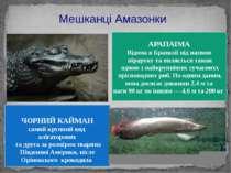 Мешканці Амазонки ЧОРНИЙ КАЙМАН самий крупний вид алігаторових та друга за ро...