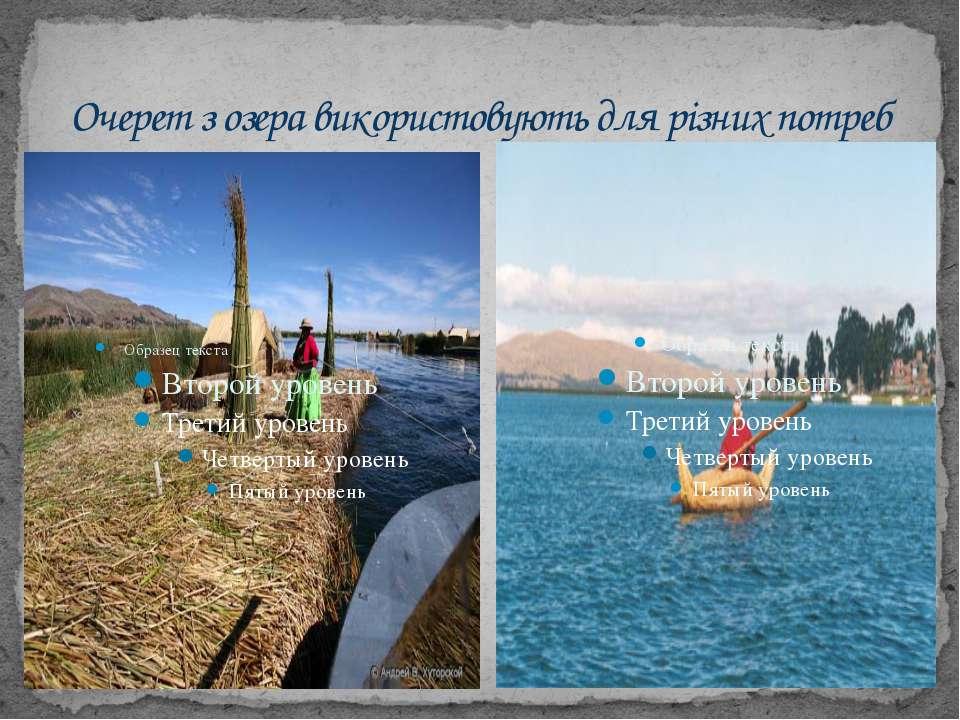 Очерет з озера використовують для різних потреб
