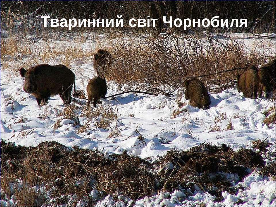 Тваринний світ Чорнобиля