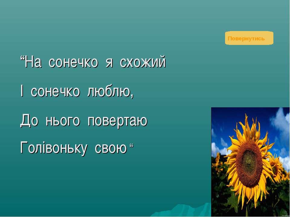 """""""На сонечко я схожий І сонечко люблю, До нього повертаю Голівоньку свою """" Пов..."""