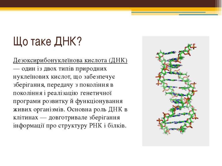 Що таке ДНК? Дезоксирибонуклеїнова кислота (ДНК) — один із двох типів природн...