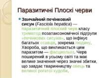 Паразитичні Плоскі черви Звичайний печінковий сисун(Fasciola hepatica)—пар...