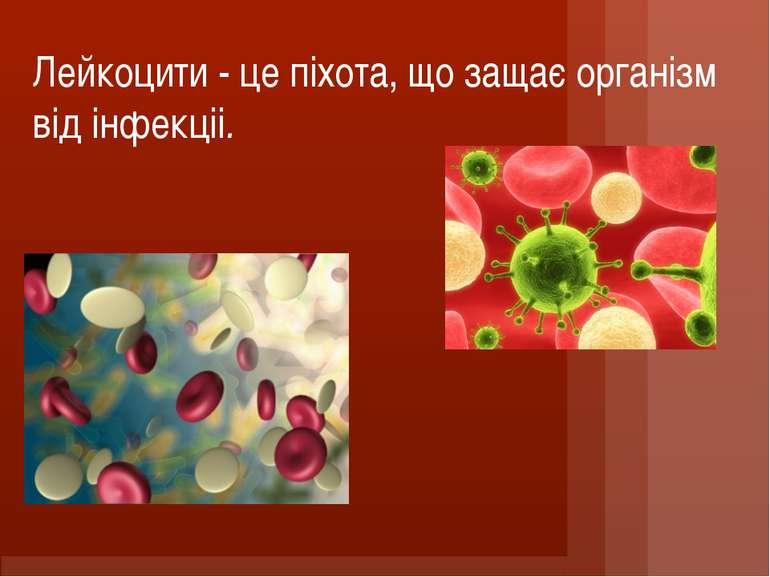 Лейкоцити - це піхота, що защає організм від інфекцii.