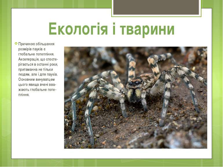 Причиною збільшення розмірів пауків є глобальне потепління. Акселерація, що с...