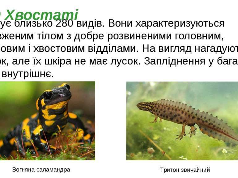 Налічує близько 280 видів. Вони характеризуються подовженим тілом з добре роз...