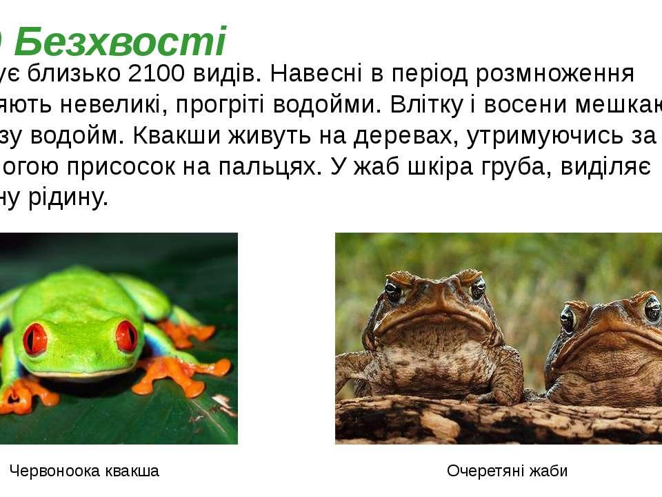 Налічує близько 2100 видів. Навесні в період розмноження заселяють невеликі, ...