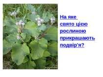 На яке свято цією рослиною прикрашають подвір'я?