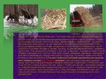 Якщо говорити про тверде біопаливо, то в першу чергу потрібно розрізняти пали...