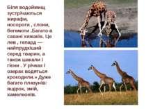 Біля водоймищ зустрічаються жирафи, носороги,слони, бегемоти.Багато в сава...