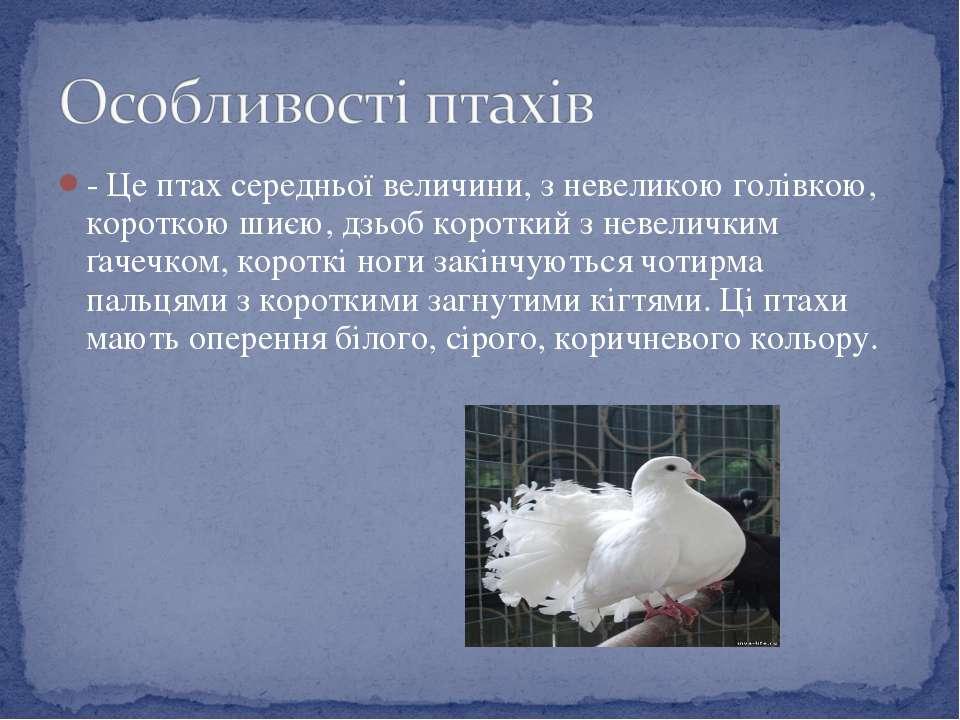 - Це птах середньої величини, з невеликою голівкою, короткою шиєю, дзьоб коро...