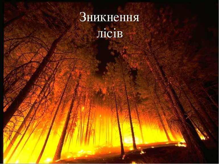 Зникнення лісів