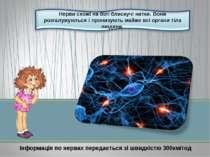 Інформація по нервах передається зі швидкістю 300км/год